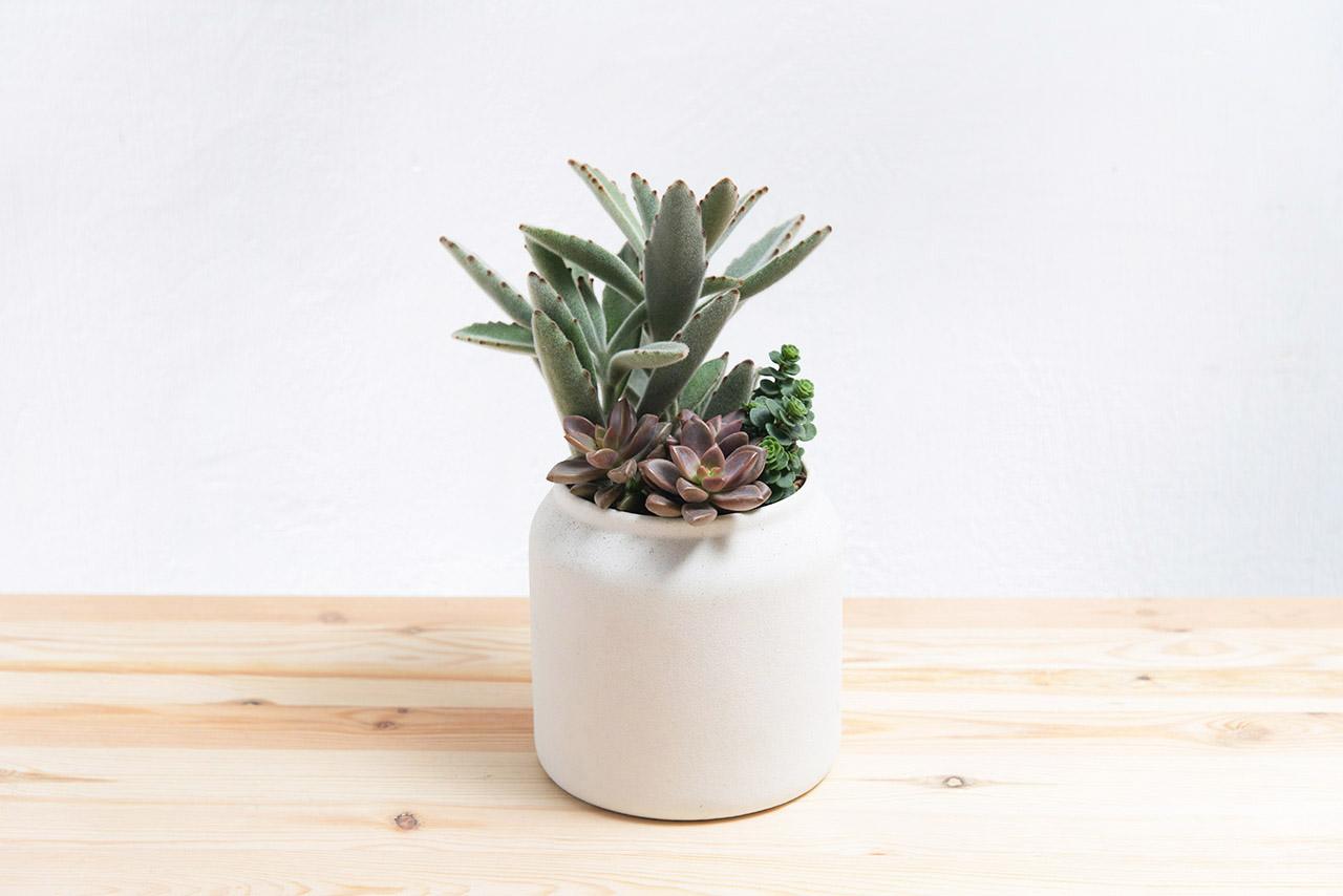 有喜歡簡約的新竹朋友的話就很適合送他白色花盆的盆栽唷