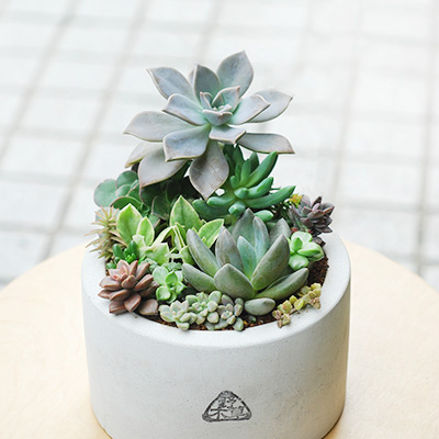 平實大氣的盆栽禮物