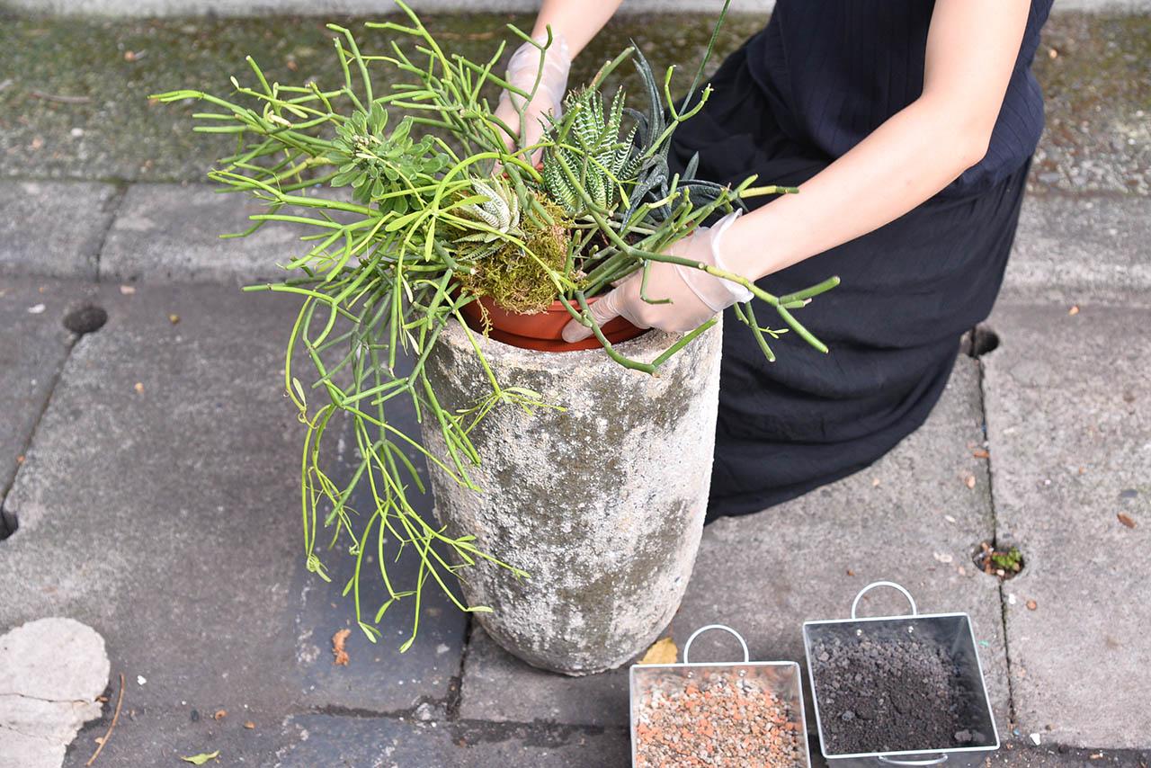 多肉植物盆栽組合技巧教學