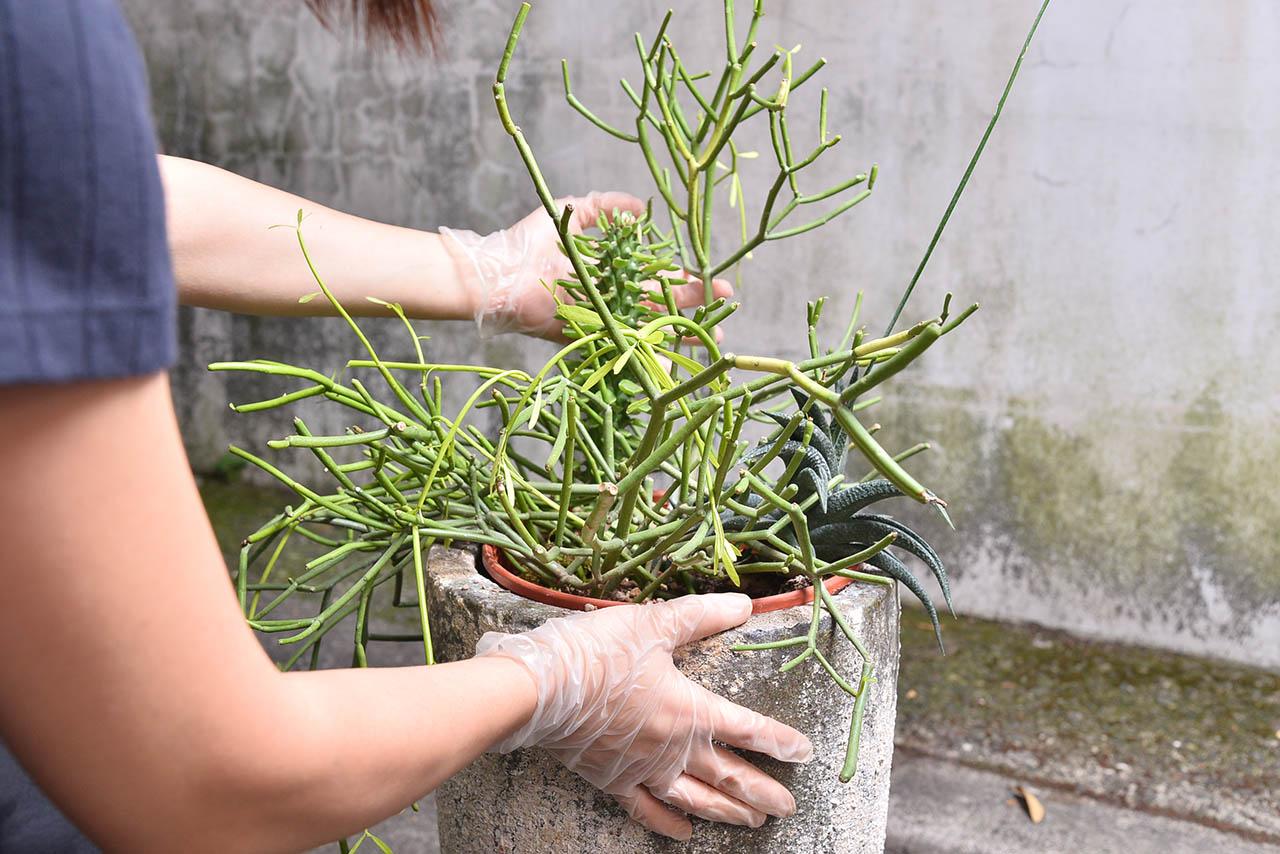 組合盆栽調整植物的位置