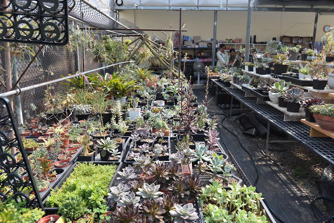 多肉植物花園