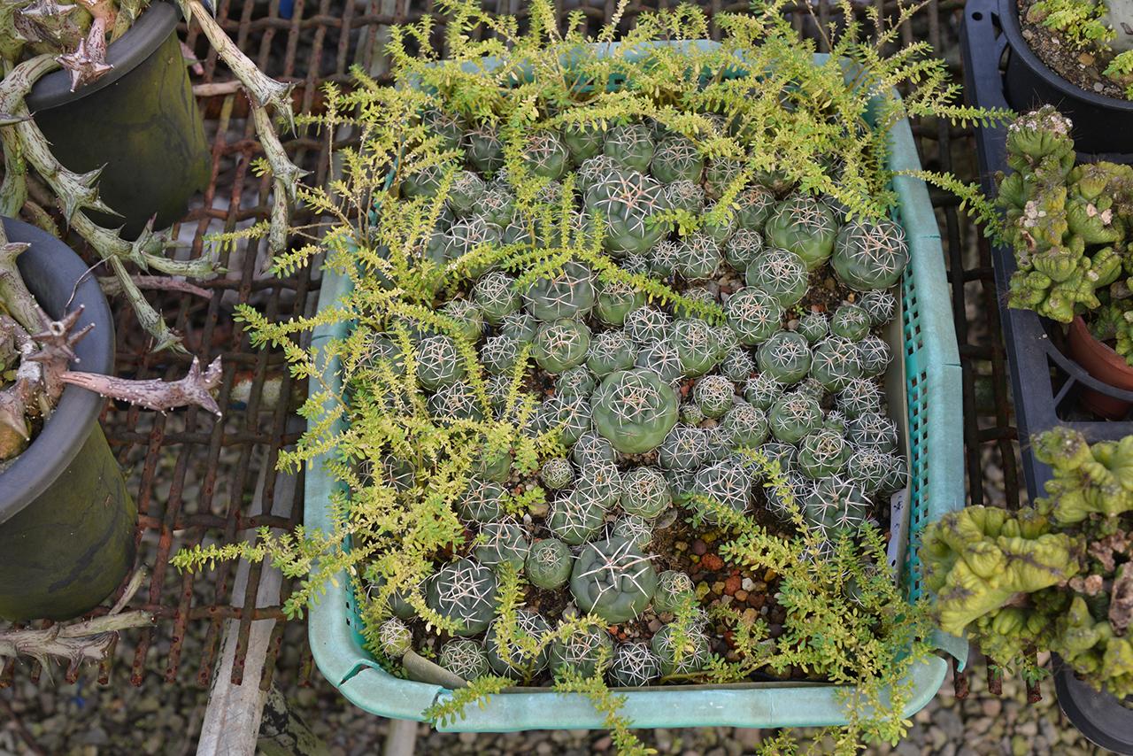 仙人掌栽培區