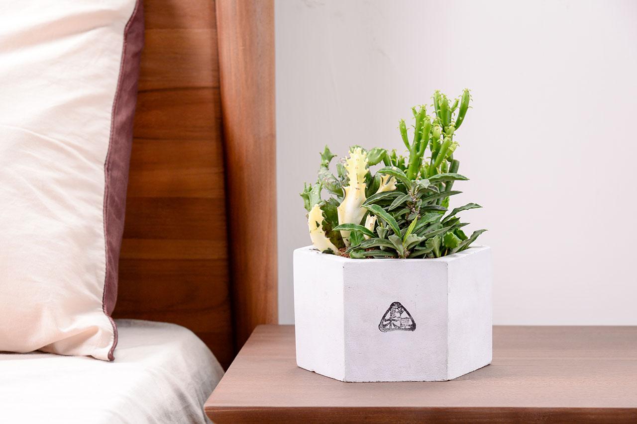 水泥盆栽簡約融入每種裝潢風格