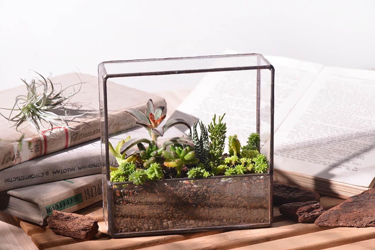 生態箱盆栽-秘密溫室