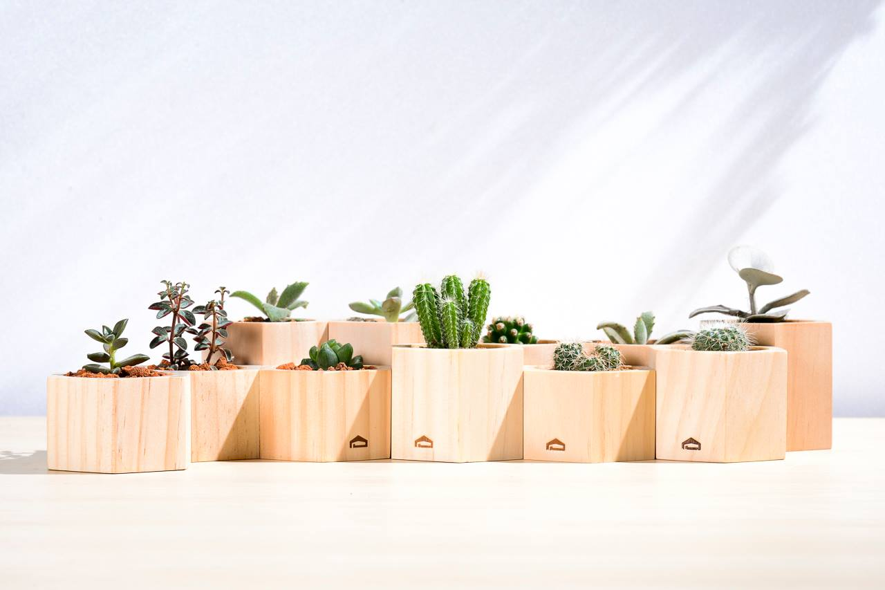 木頭盆栽容器