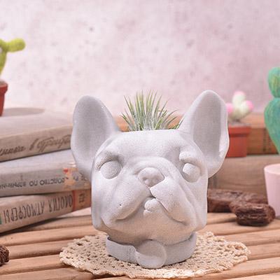 簡單好照顧的空氣鳳梨盆栽禮物