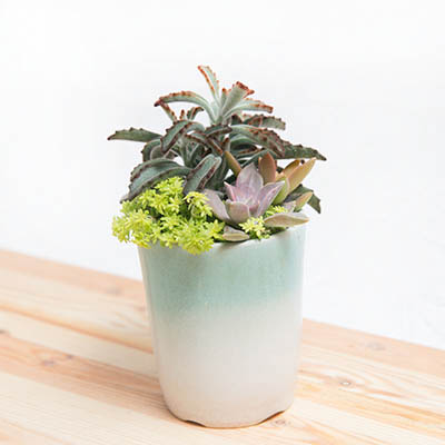 青花素盆-湖水綠 1