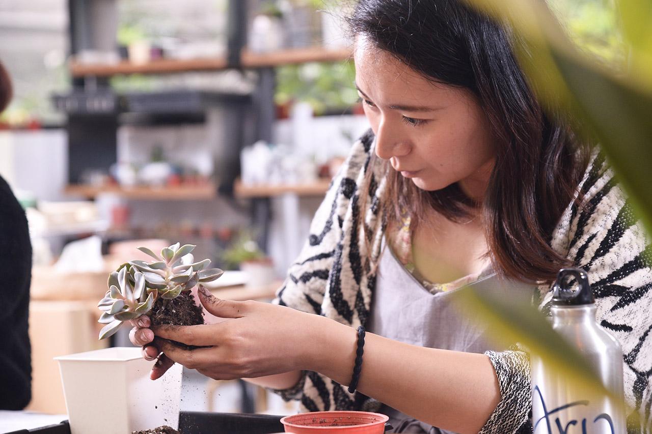 多肉植物正確的移盆方法也會在課程中教給你,讓你回家也可以自己DIY把植物移到大盆內喔~