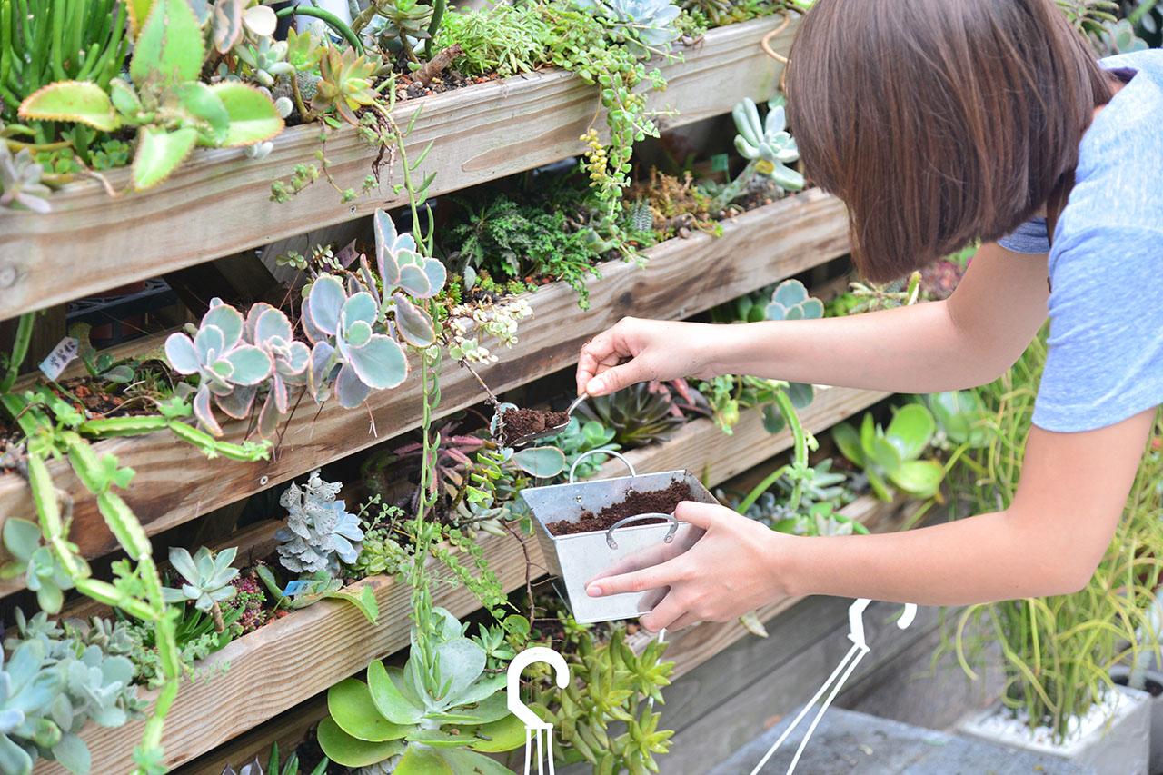 將咖啡渣平均撒在花圃邊緣