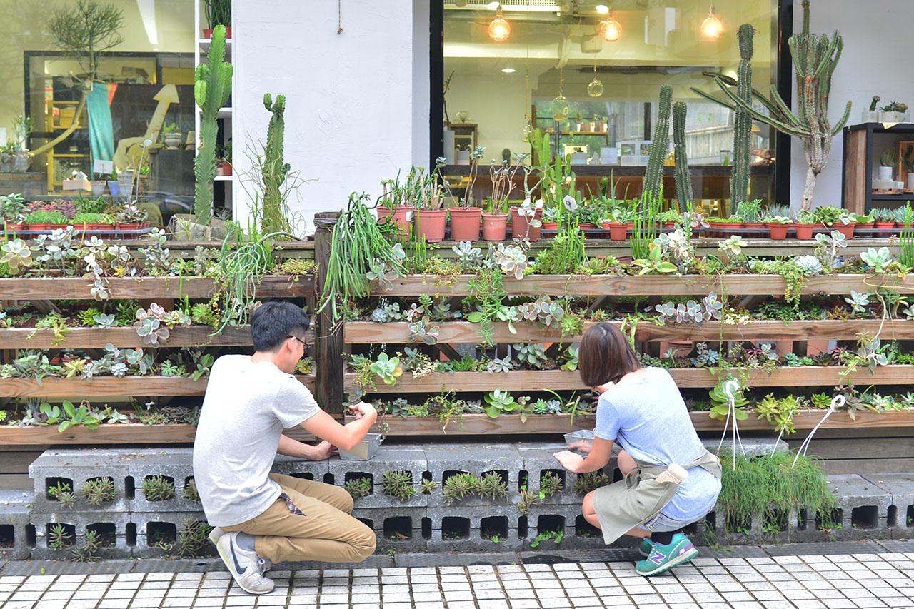 多肉植物牆照顧