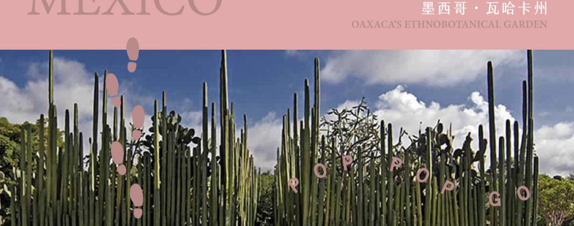 世界多肉地圖:墨西哥仙肉殿堂(電影般的夢幻場景) 2
