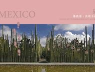 世界多肉地圖:墨西哥仙肉殿堂(電影般的夢幻場景) 05