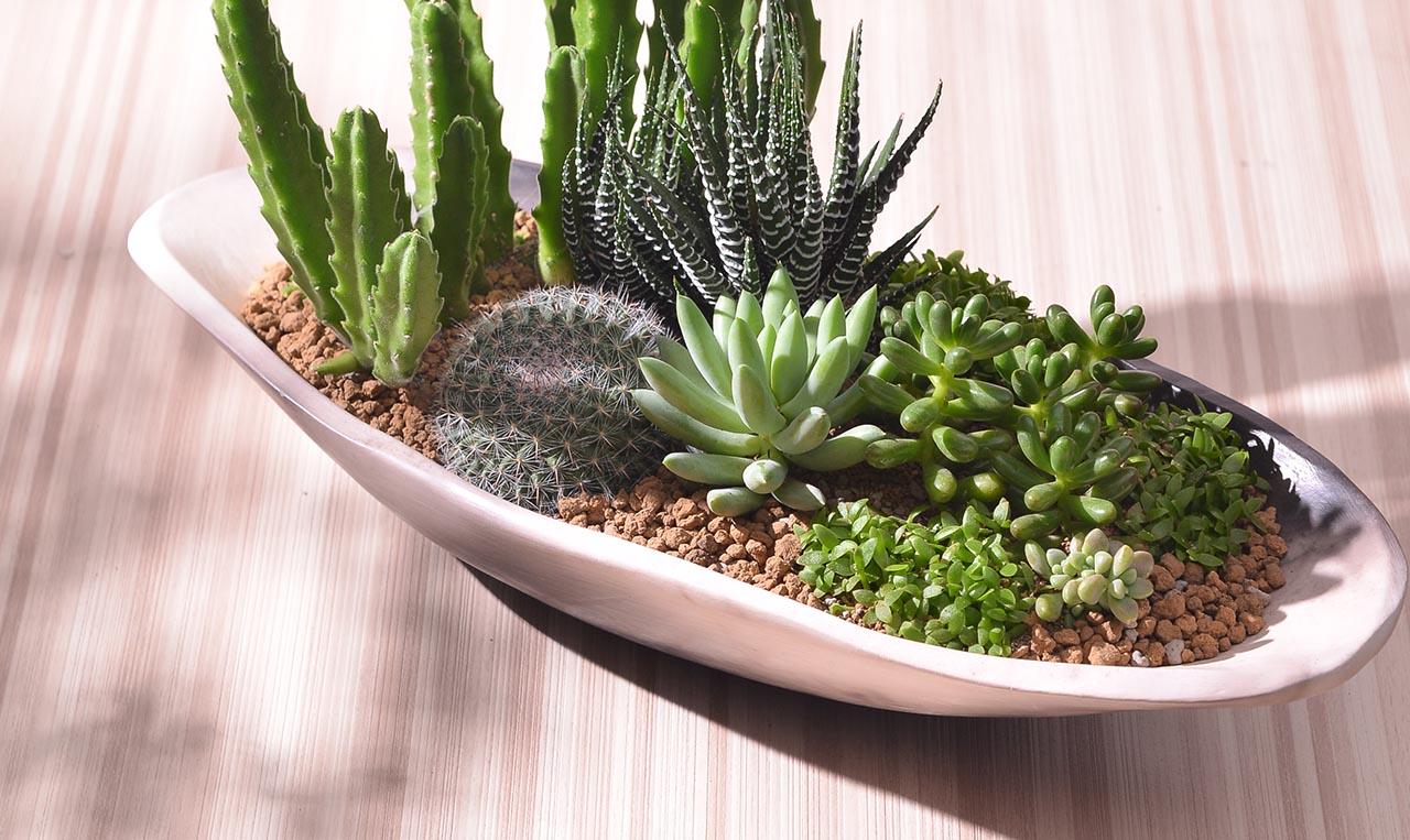 素燒陶盆桌上盆栽