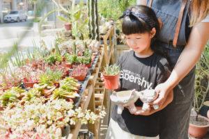 挑選植物盆栽