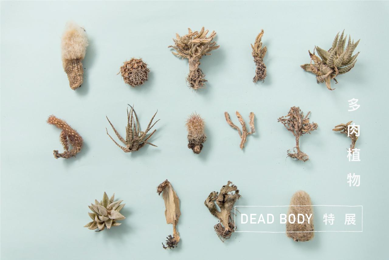 植物死亡的特展