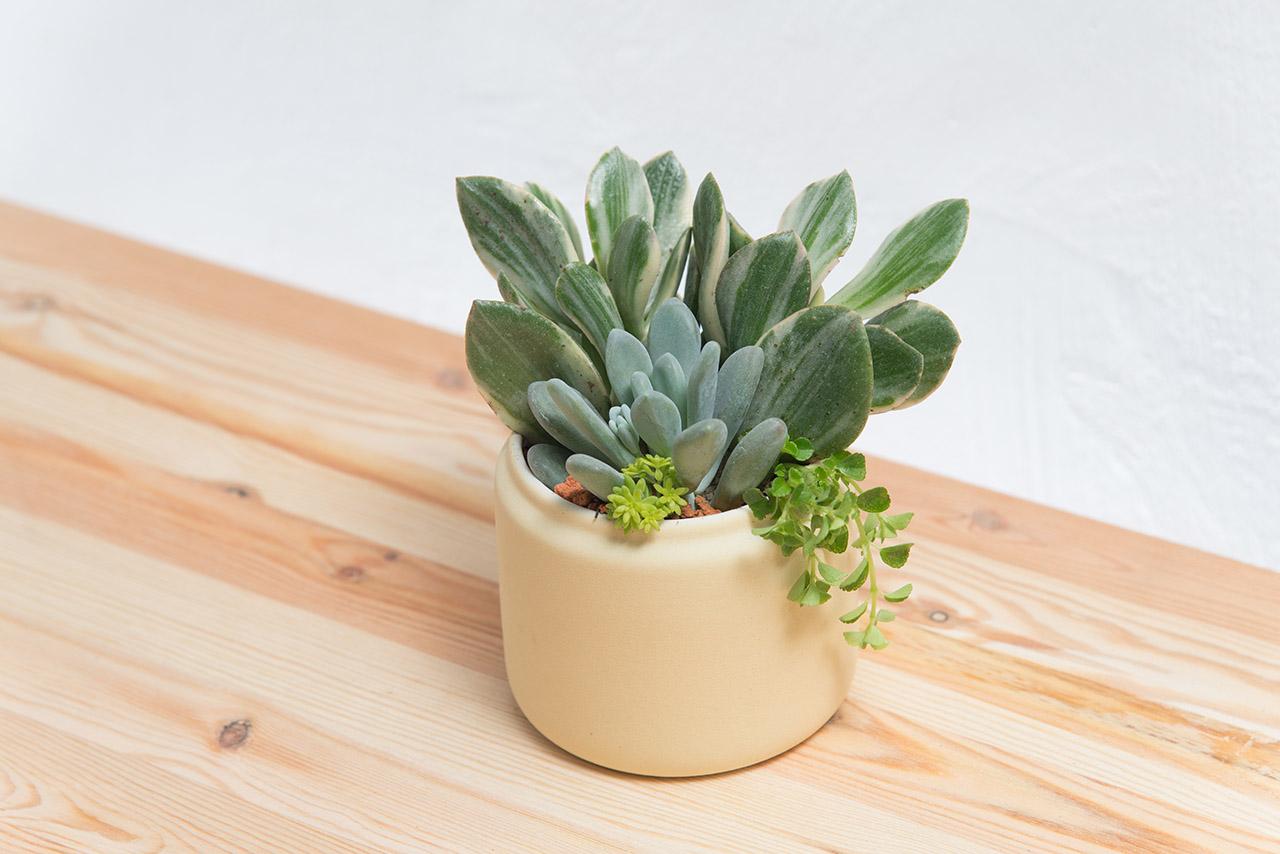 黃色花盆與多肉植物在木桌上