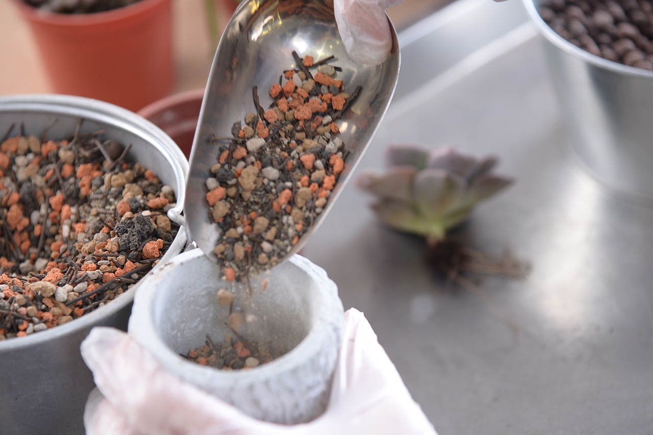 開始種植後就可以加入多肉植物專用土了
