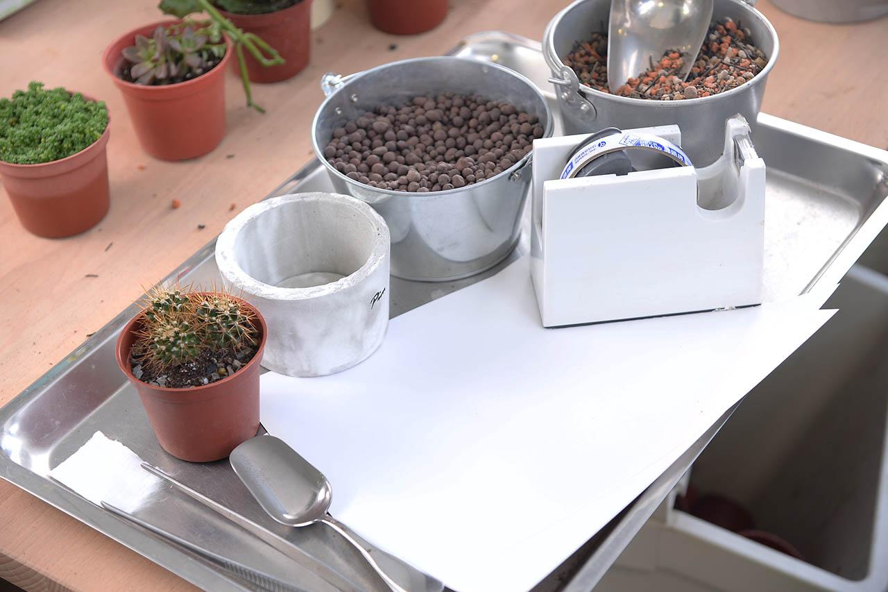仙人掌換盆教學,事前需要準備工具:水泥盆與多肉植物專用土