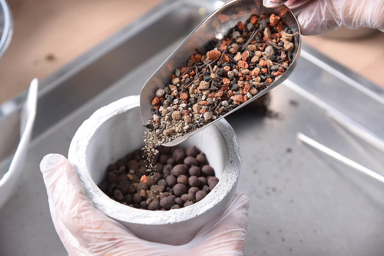 拿起水泥盆,發泡煉石鋪好後,倒入多肉植物專用土,這種土疏水性佳,適合多肉植物的種植