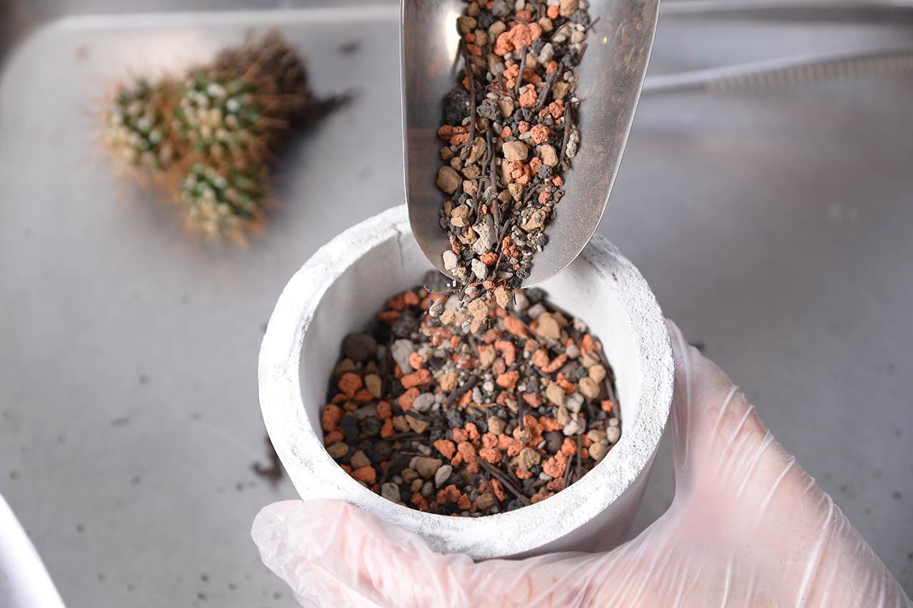 拿起水泥盆,發泡煉石鋪好後,倒入多肉植物專用土,到大約二分之一滿,即可進行下一個步驟,種植多肉植物