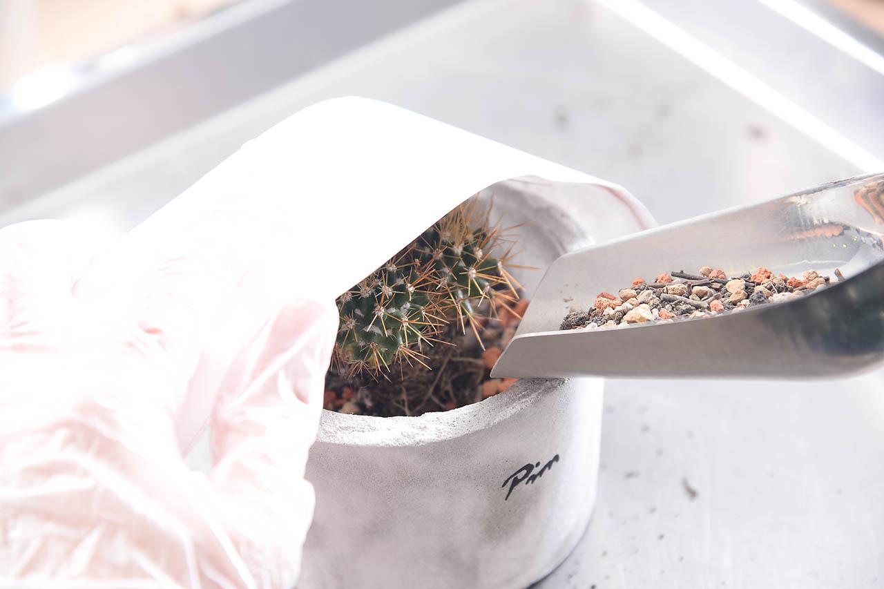 拿起水泥盆,將剛才整理好根系與土壤的仙人掌放進盆內,再從邊緣倒入更多多肉植物專用土