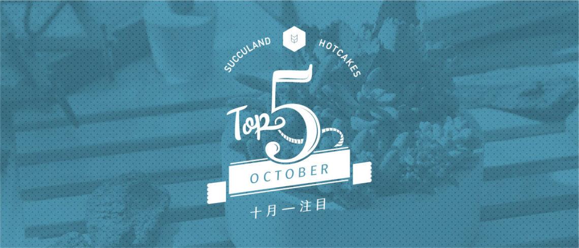 有肉 10 月開幕送禮盆栽 TOP 4 top5 sep succland cake 1101 2 02 copy
