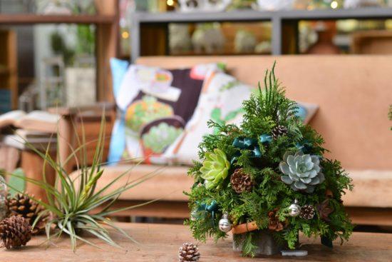 有肉:今年聖誕節一起交換植物! 00047