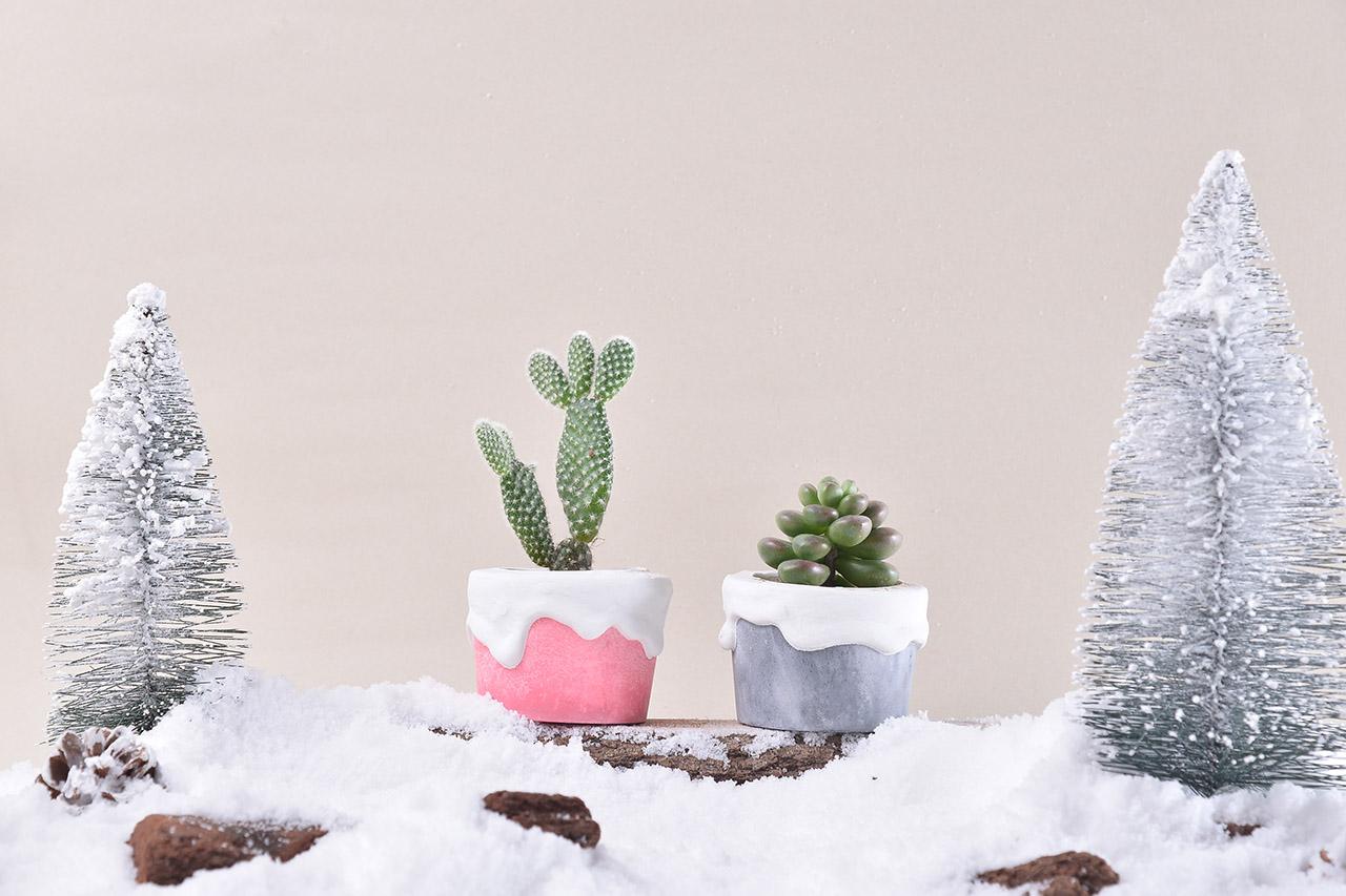 開幕送禮盆栽與升官、升遷送禮的好選擇,搭配冷冷的冬天,讓整個畫面深刻你心