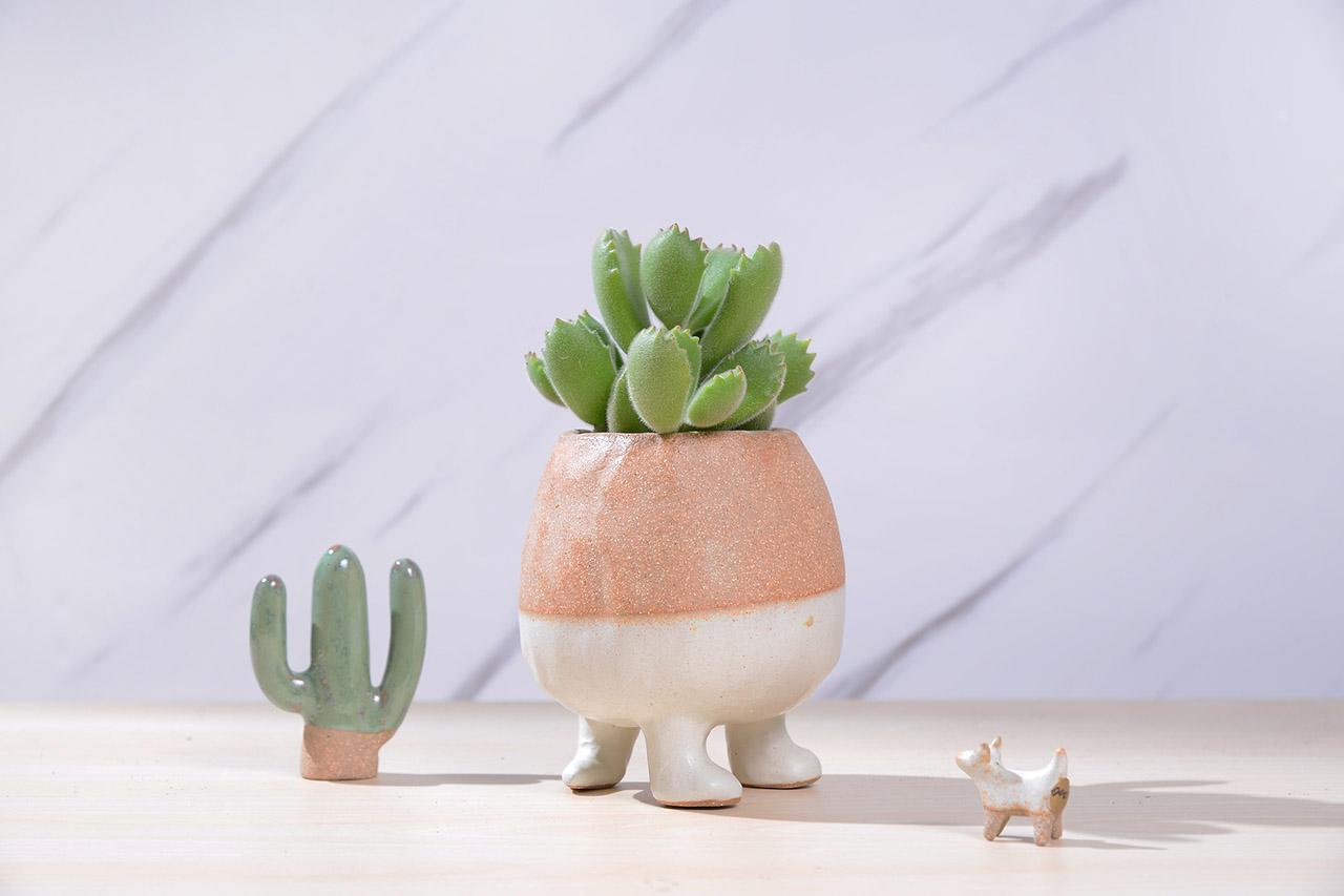 手捏造型陶盆與多肉植物熊童子