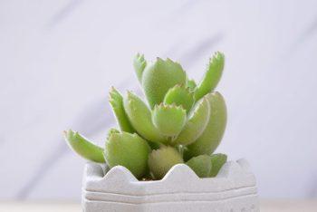 這是你擁有的第一盆多肉植物嗎? 1