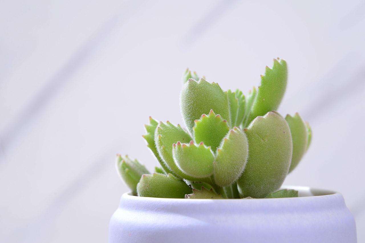 這是你擁有的第一盆多肉植物嗎? 6