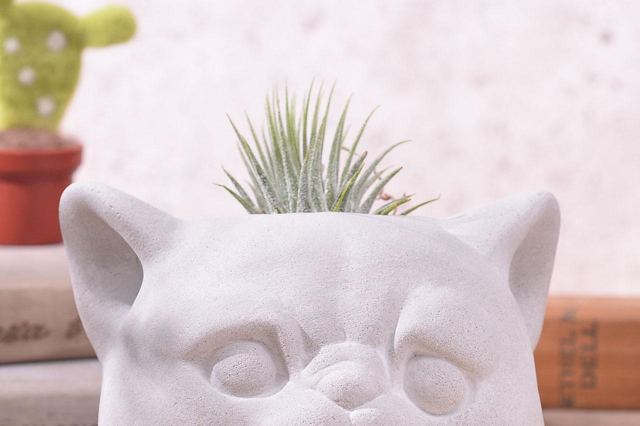 毛小孩與肉肉-扁臉貓 2羊毛氈+商品1012 2782