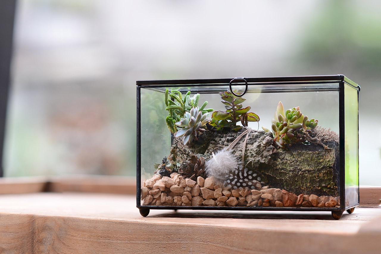 森林寶盒是一堂兼具插花與造型製作的課程,使用的材料是多肉植物以及大型顆粒介質