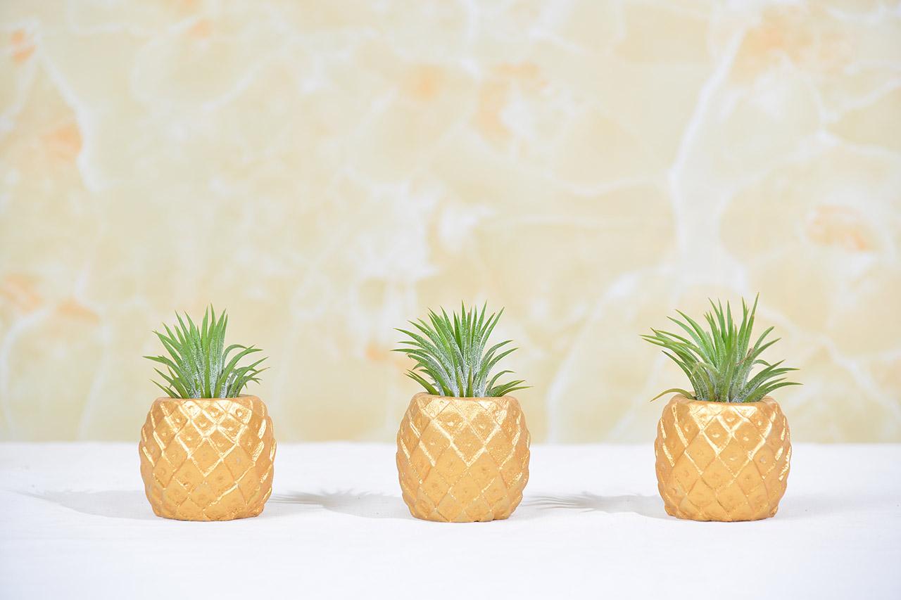 空氣鳳梨禮物專區,開幕送禮、開業盆栽都很推薦