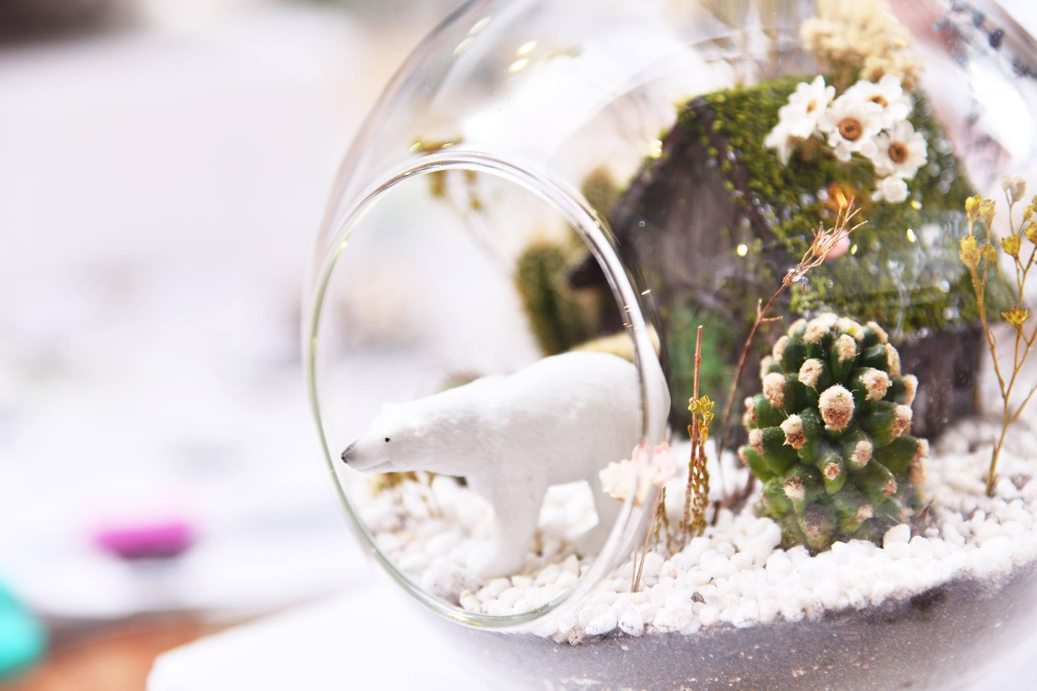 多肉植物玻璃球課程,北極熊公仔與仙人掌