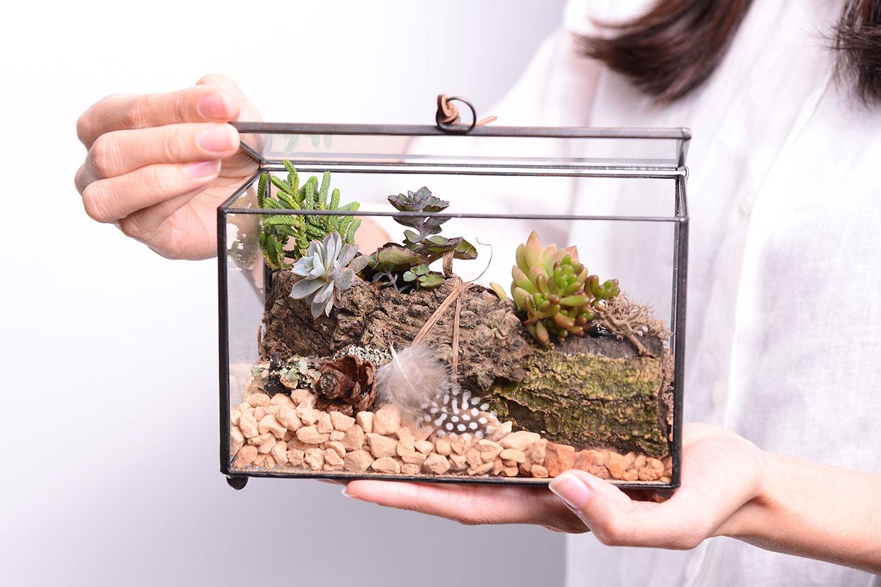 讓多肉植物的花藝能夠擁有更多可能性,創造屬於自己的小溫室作品