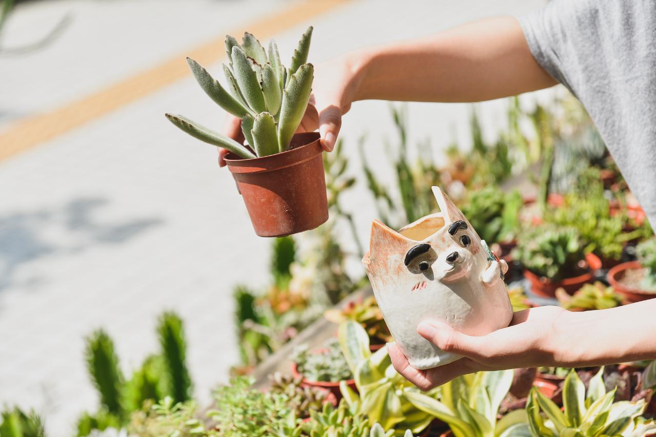 挑一盆喜歡的多肉植物,療癒你的心,再種進自己手捏的陶盆中,絕對是超萌的一件事