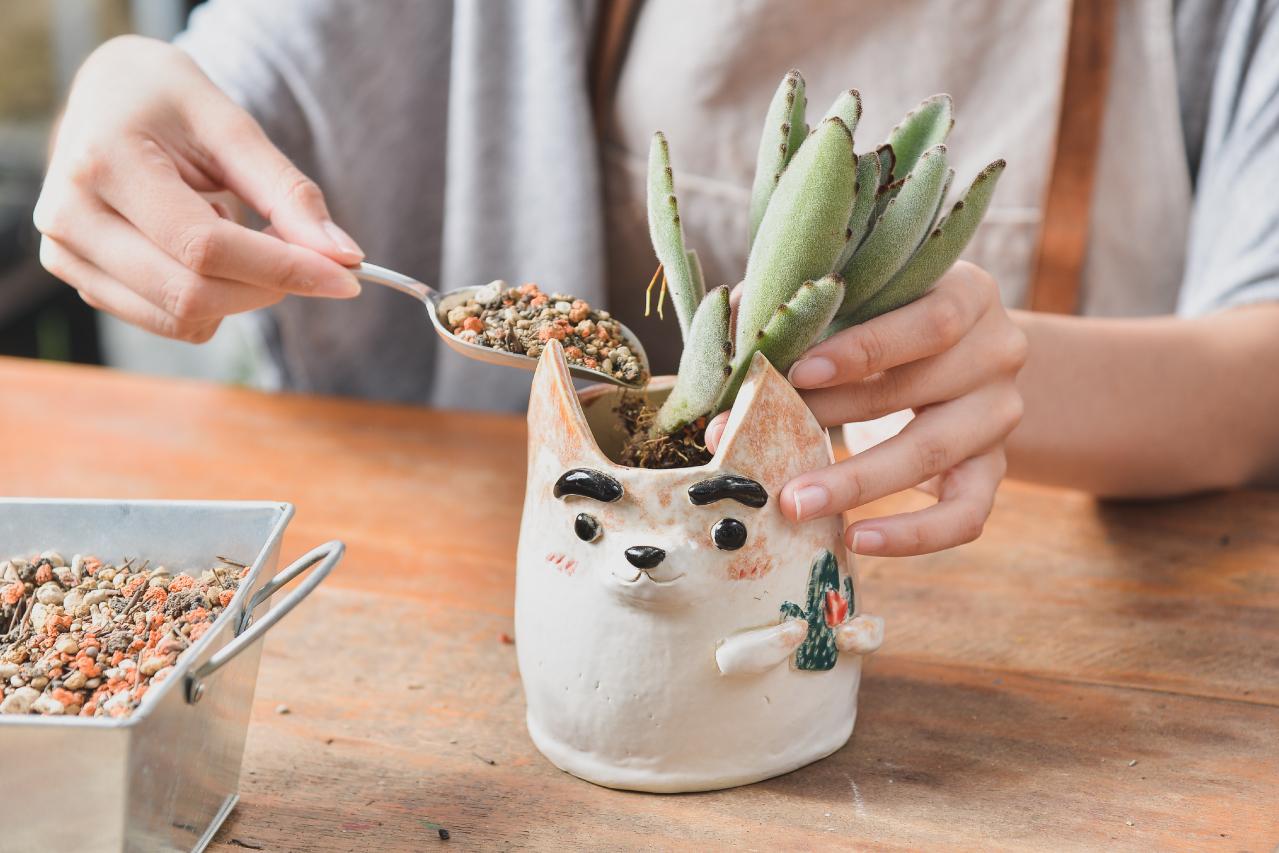 把多肉植物專用土加入已經燒製好的手捏陶中