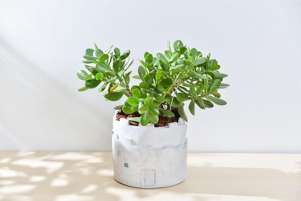 發財樹 – 大城堡盆栽 3