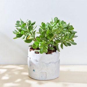 發財樹 – 大城堡盆栽 1