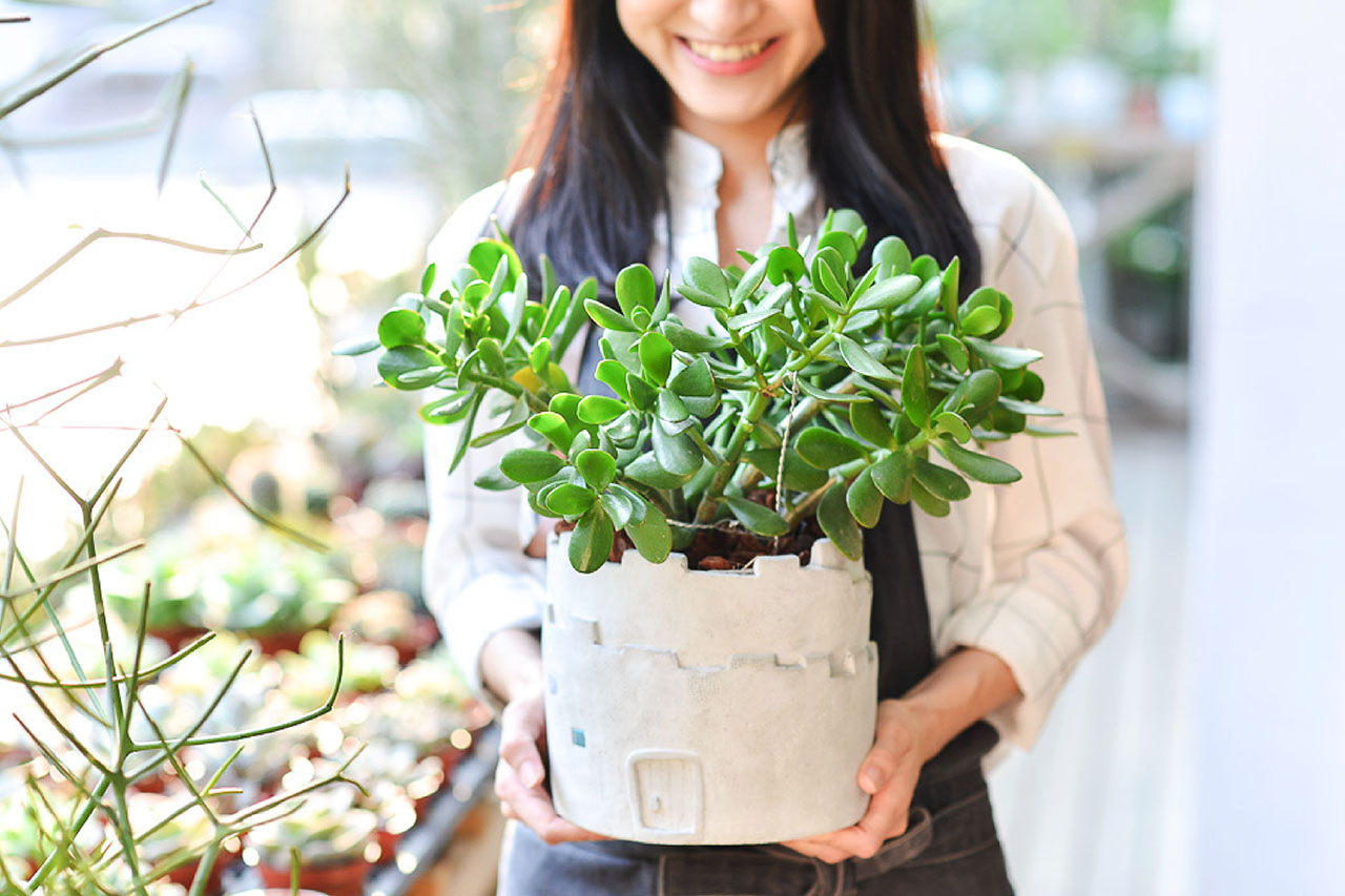 升職盆栽搭配發財樹與設計師盆器