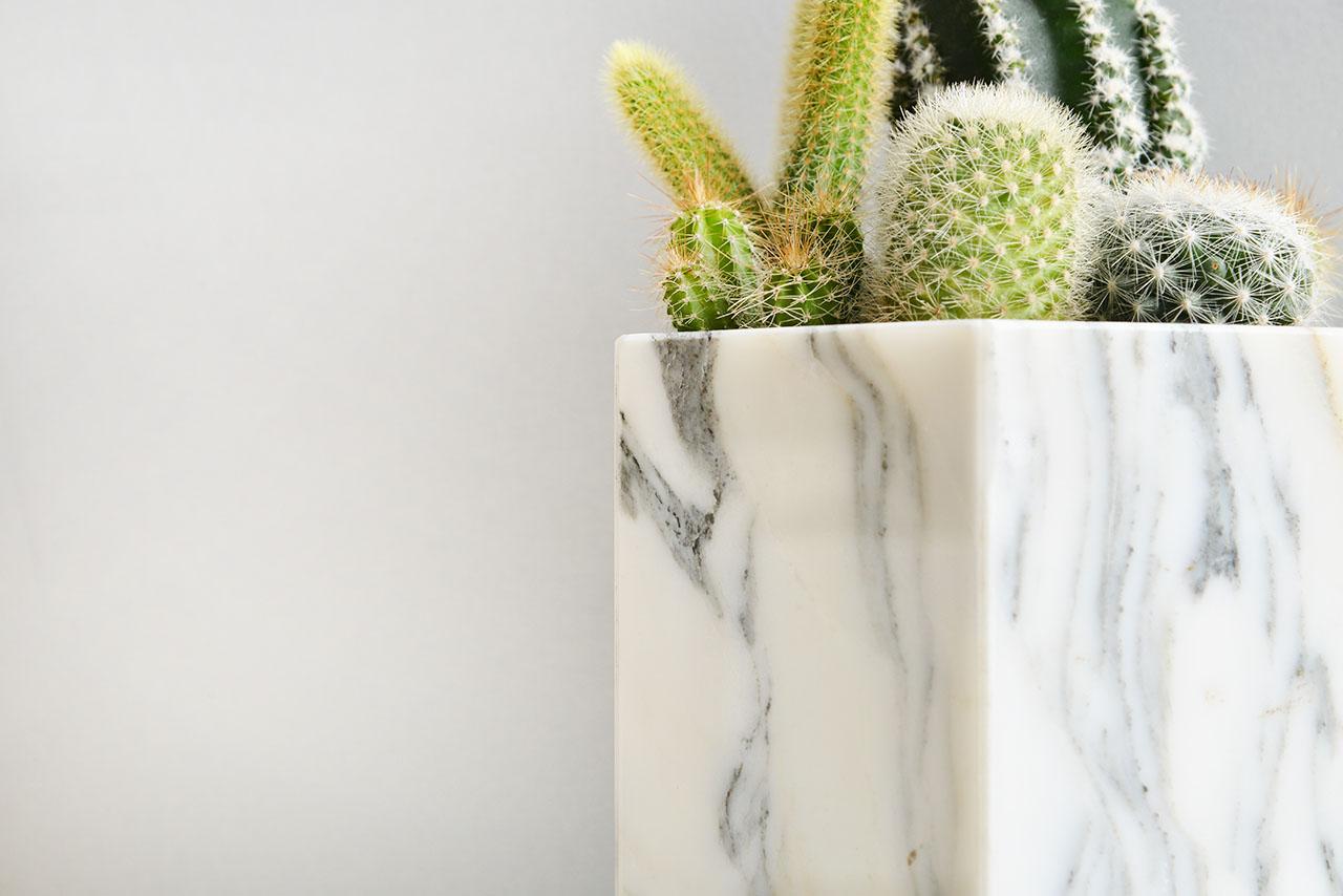 銀狐白大理石盆 - 仙人掌組 0308生肖與金光閃閃多肉植物 1574