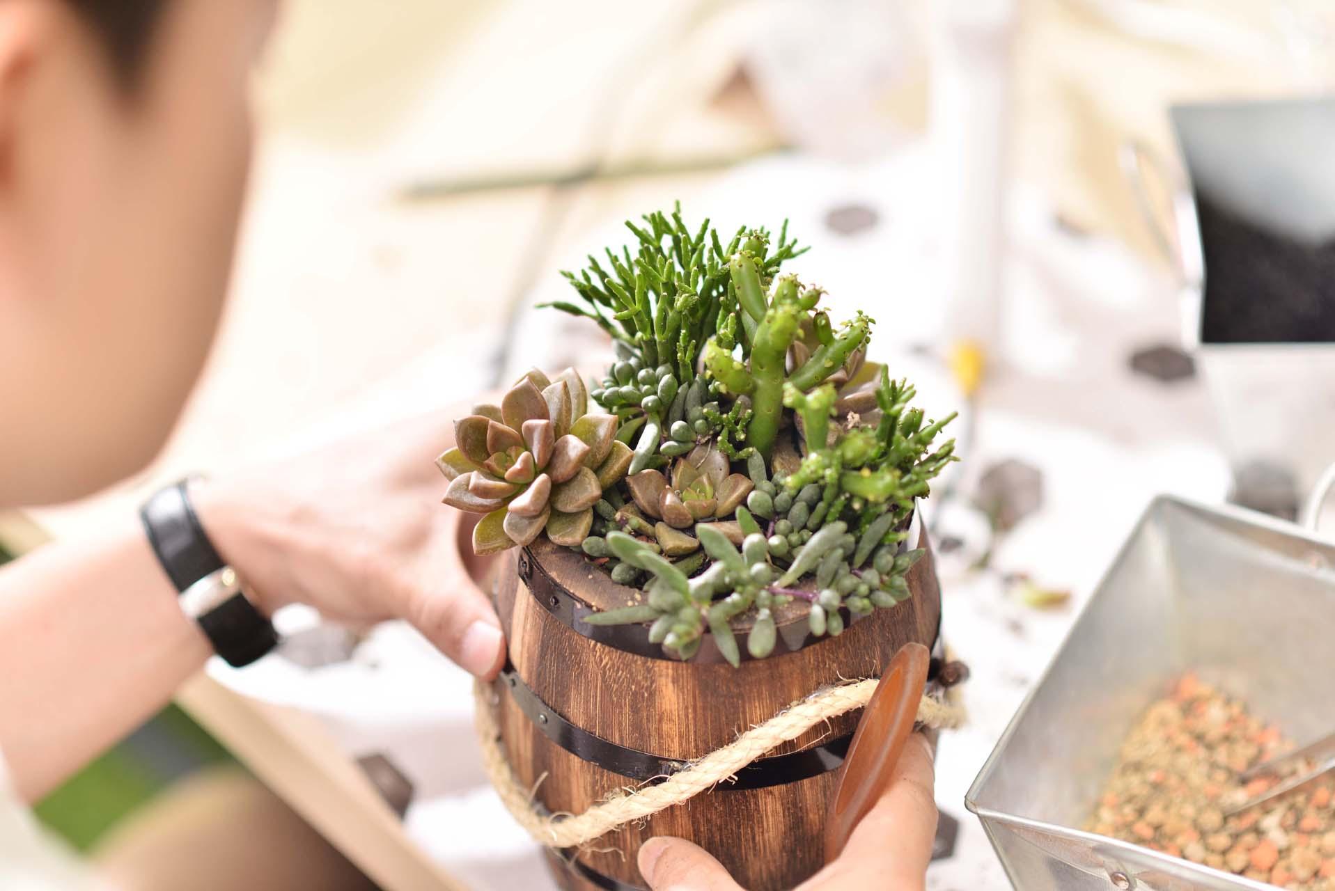 透過組合盆栽的課程,帶領你知道該如何照顧一群的多肉植物,讓組盆也可以長得更好