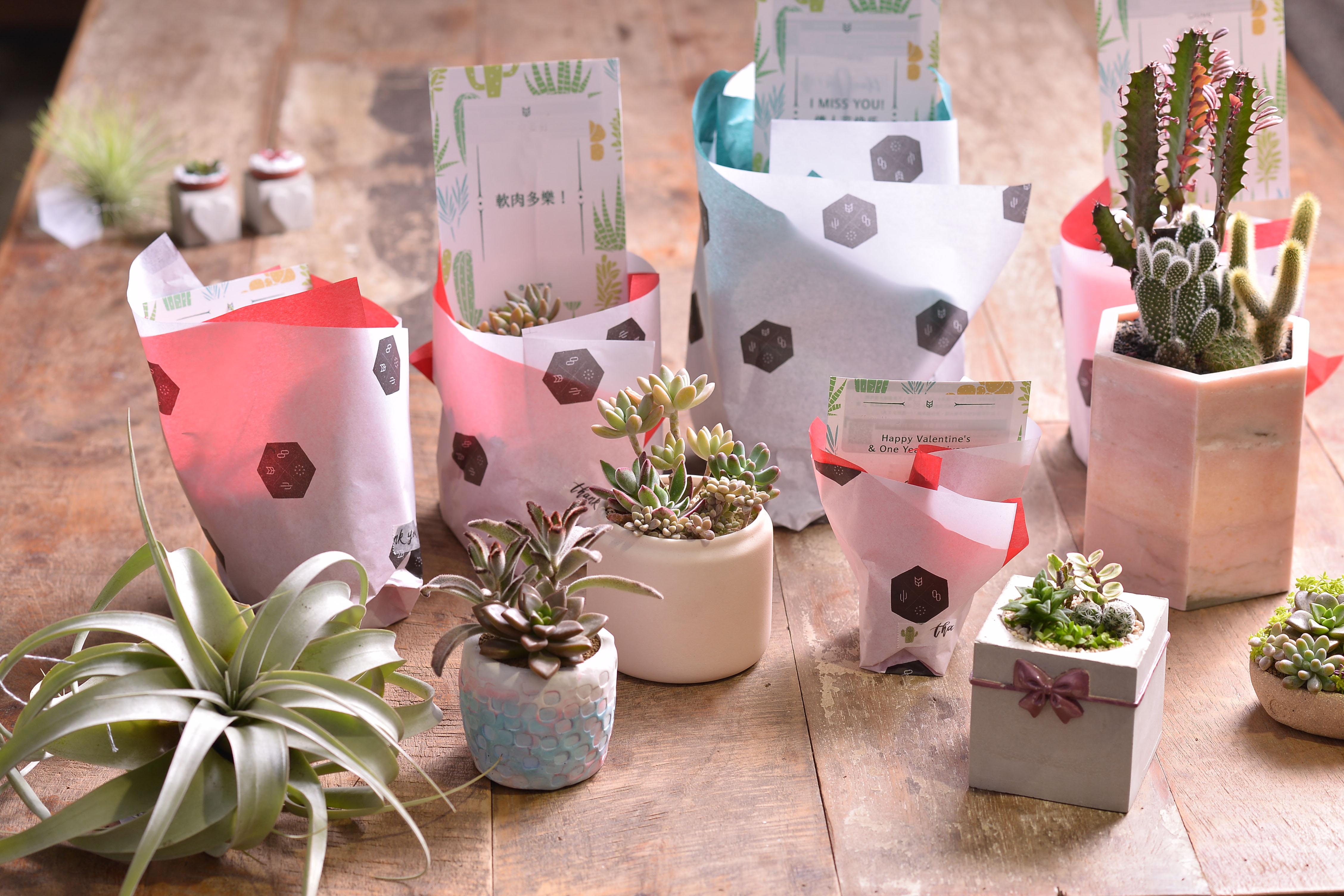 多肉植物組盆,開幕送禮、升官祝賀,禮品包裝樣式