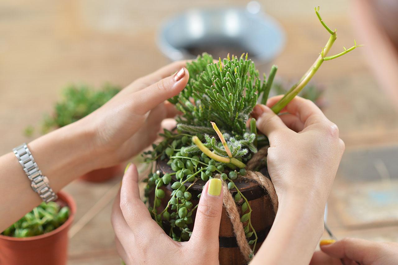 將多肉植物深植於酒桶之中,在老師的教學帶領下,一步步掌握組盆的要點