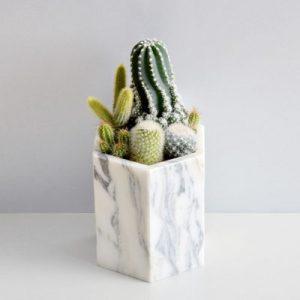銀狐白大理石盆 - 仙人掌組 06