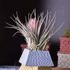 小金字塔(四色)+棉花糖空氣鳳梨 1
