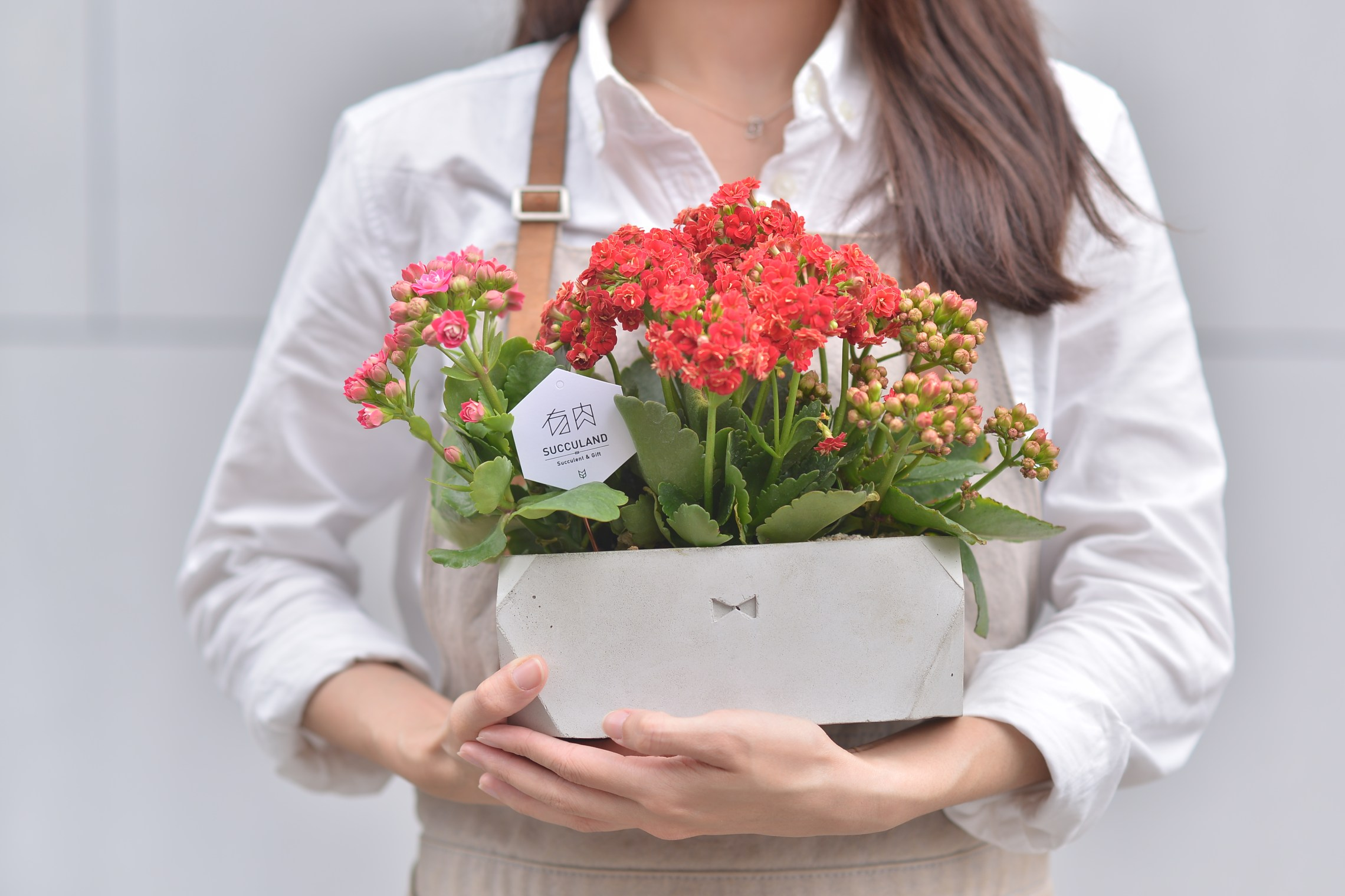 長壽花盆栽 - 禮物寶盒 1