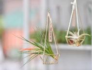 美甲店開幕送禮推薦,符合裝潢風格的盆栽禮物,空氣鳳梨掛飾