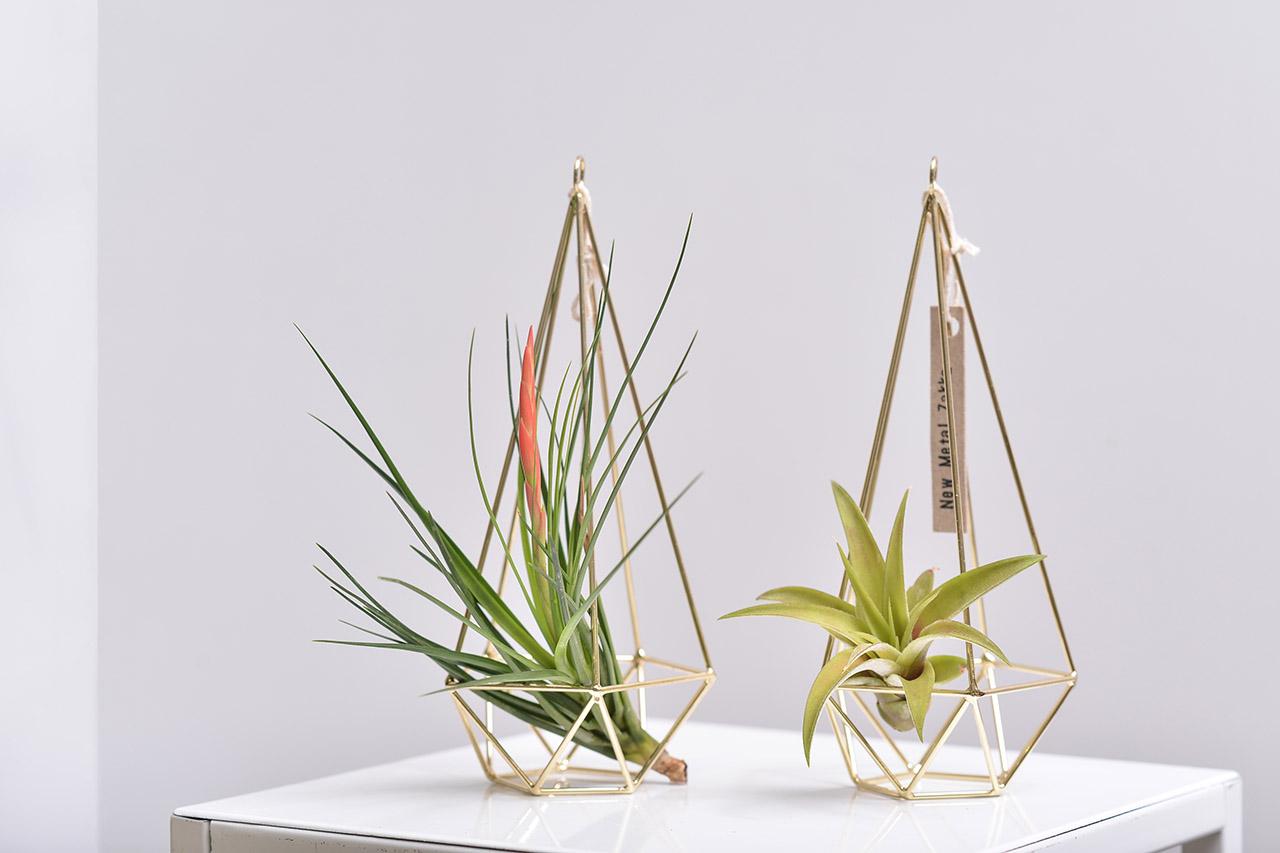 空氣鳳梨與幾何金屬